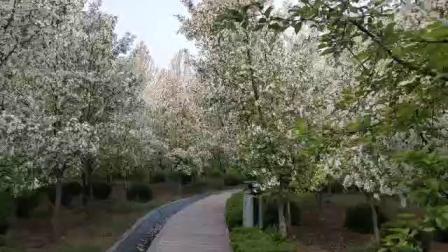 淄博马桥植物园美景