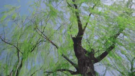 拍好一棵树,总共分三步,你学会了吗