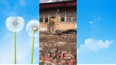 我的老家在农村-乡土风情好视频