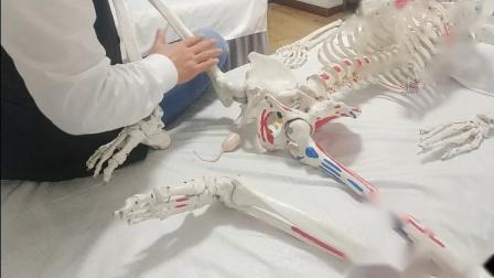 聚医康-巴俊一指私密强化盆底肌抗阻训练