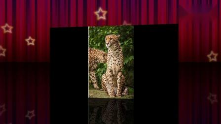 保护野生动物.mp4