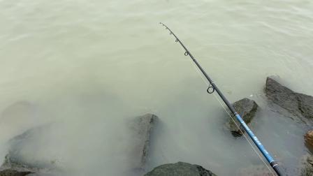 海钓虎头鱼