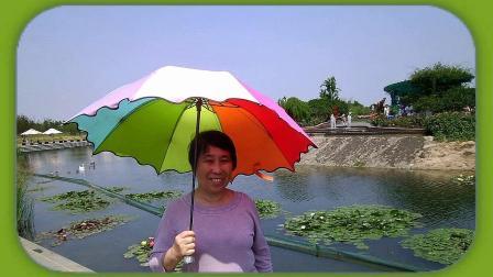 音画欣赏 上海辰山植物园的玫瑰 送我一支玫瑰花 (升级高画质 高音质)