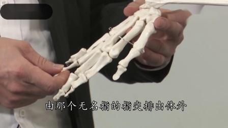 手部对应的人体躯干