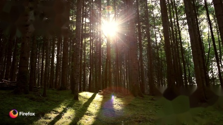 Firefox_宁静的森林