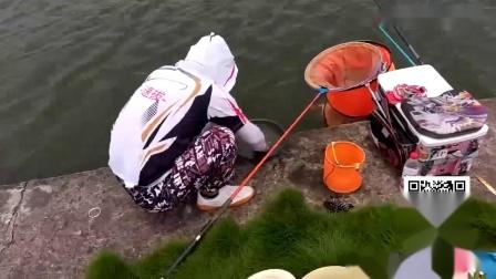 速拔哥钓鲤鱼技巧视频,黑坑偷驴钓的不错,频率快打节奏连杆上鱼还算不错