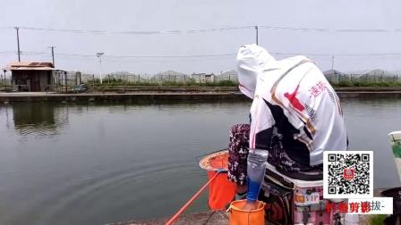 速拔哥钓鲤鱼技巧发挥好上鱼就是快,饵料小药正确频率节奏保持好,就是不一样