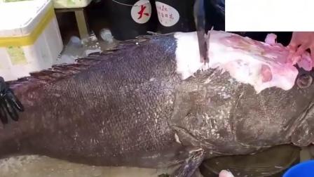"""""""巨型""""野生大石斑,杀这鱼像杀猪费劲,只好请""""鱼王""""出手!"""