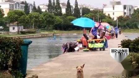 钓鱼技巧最新视频,钓鱼比赛小型掐鱼钓鲫鱼,玩的很不错