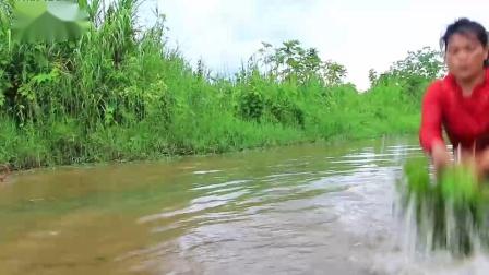 漂亮少妇荒野生存,河里寻到食物做野餐,最后却给了狗狗们