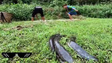 荒野小夫妻,在泥水沟里如何抓鱼,一条接着一条,太厉害了