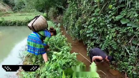 荒野夫妇求生,齐心协力终于抓获了条4斤大鱼,高兴的背回了家