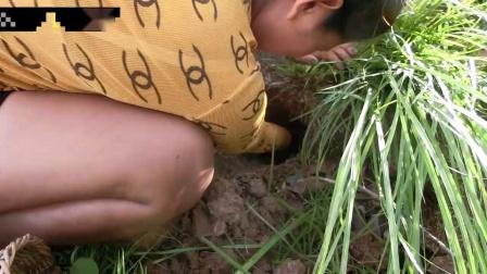 荒野少妇上山打野,竟然在土里挖出来一条鱼,高兴坏了
