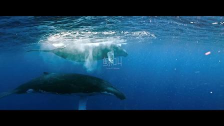 《鲸碳之歌》对白设计与短视频改编竞赛 改编组首奖–鲸叫
