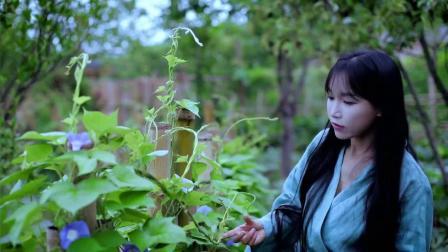 李子柒:羡慕我的小院?别急,今儿搭个竹墙,简单吧!