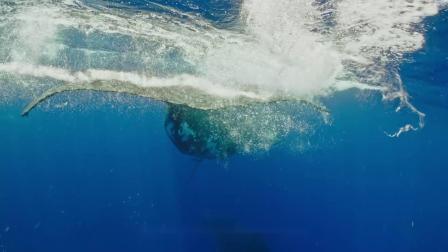 《鲸碳之歌》对白设计与短视频改编竞赛 改编组三等奖–新朋友
