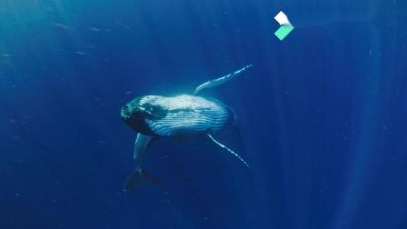 《鲸碳之歌》对白设计与短视频改编竞赛 对白组三等奖–授子终言