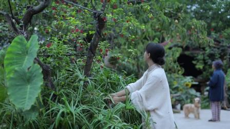 李子柒:这一期就是种番茄诺,酸甜可口
