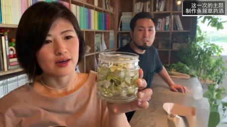 鱼腥草药酒制作小教程