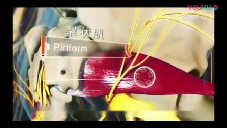 坐骨神经和坐骨神经痛的原理骨科3D动画视频讲解正骨推拿学习必备神器_高清