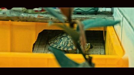 【玉帝之杖】实拍巴西龟宝宝每天例行的翻墙练习