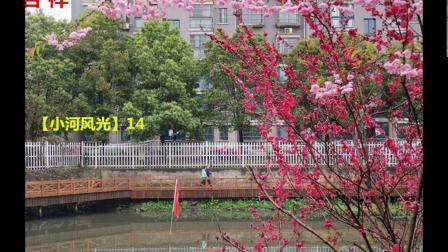芜湖市镜湖区 红梅社区【小河风光】50帧片照片 配乐视频 2020.8.15.