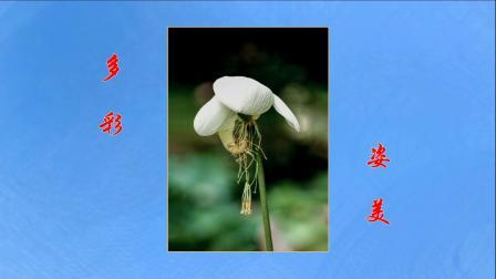 2008-2019 仓桥翁摄影习作 赏荷