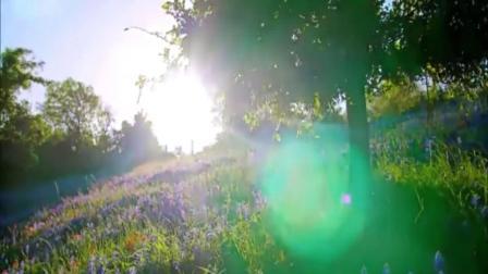 钢琴《阳光明媚的早晨》