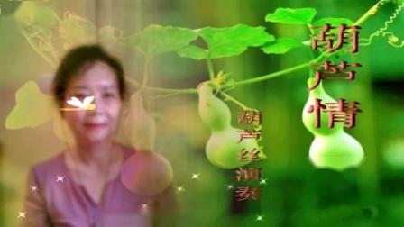 葫芦丝《葫芦情》 尖椒