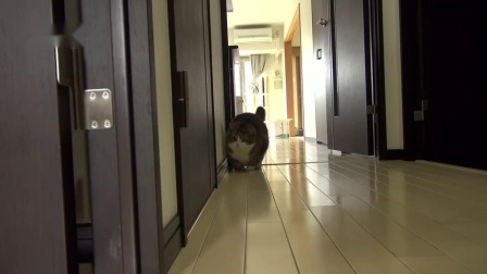 纸箱猫咪!为什么猫咪会这么喜欢纸箱呀  哈哈哈