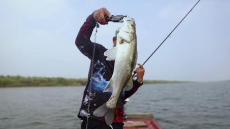 LURELOGS绫罗路亚|围河海鲈洗鳃猛,高效风尚拉力强