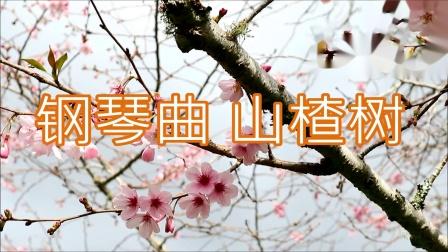 钢琴曲 经典歌曲 山楂树