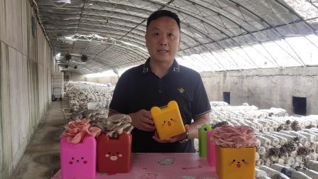 卡通款蘑盒种植视频【完整】