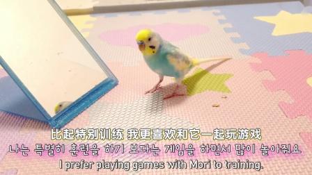 高智商小动物的日常,养一只鹉星人是什么体验? | 神迹字幕组