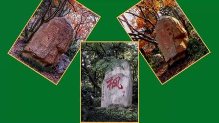 2020-枫景独好 (一)赏枫打卡胜地  修改稿