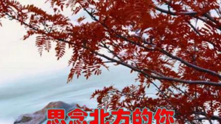 山谷里的思念(演唱)谢军 福厚合成.mpg