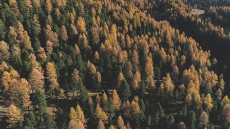 圣莫里茨金色的秋天