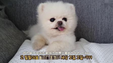 狗子生病期的邋遢影像:打喷嚏把自己吓了一跳!