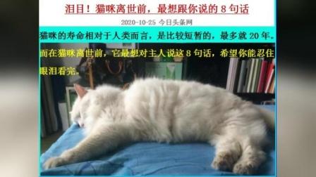 泪目!猫咪离世前,最想跟你说的8句话  MV_202010250707