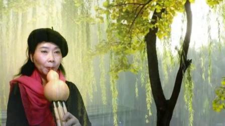 葫芦丝《秋蝶》尖椒