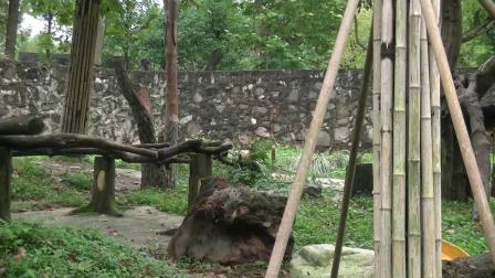 走进四川2熊猫基地
