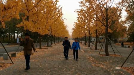 秋游北京园博园-2020年10月31日。