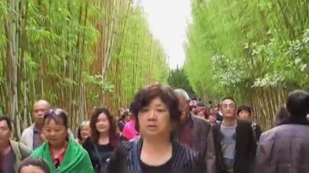 蝴碟泉边  录制赵文_高清