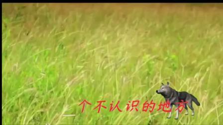 受了伤的狼-李云伴奏版