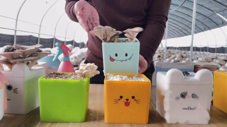多彩蘑盒视频新款20201202112904