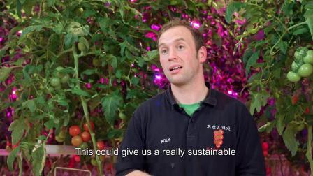 一年四季都能产生均匀大小和一致品质的水果