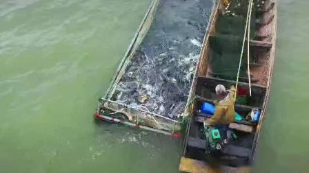 柳叶湖赶网起鱼大型活动