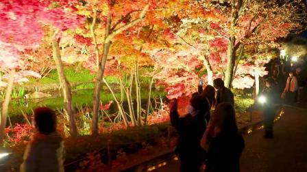 Nabana-no-Sato Nights of Lights   2020 - 2021
