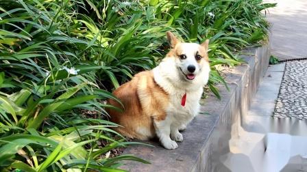 20200317土豆狗--营山复兴桥附近【1080p】--45秒