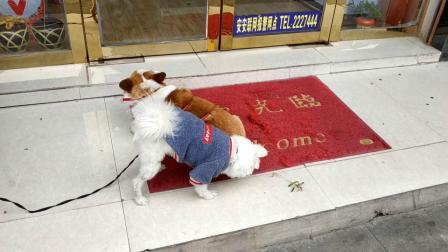 202003061222翠屏路畜牧局对面--【720p】--36秒★★★★★